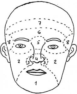 Fisiognomia - leer el rostro