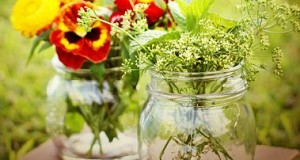 9 plantas para realizar magia natural