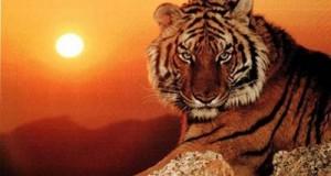 Cómo son las personas tigre en el horóscopo chino